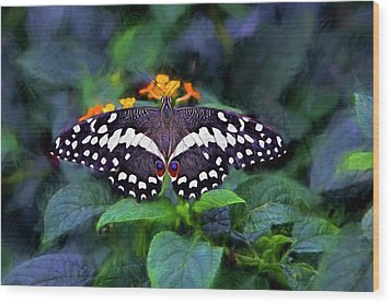 Lime Swallow Tail Wood Print by James Steele
