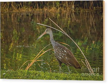 Limpkin At Water's Edge Wood Print by Tom Claud