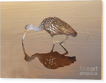 Limpkin In The Mirror Wood Print by David Lee Thompson