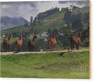 Line-dancing Llamas At Ingapirca Wood Print by Al Bourassa