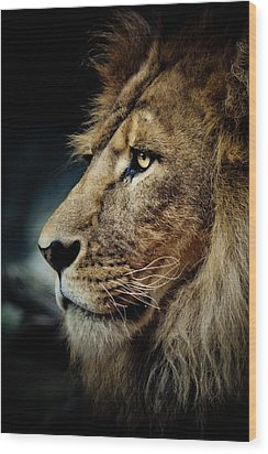 Lion Wood Print by Animus Photography