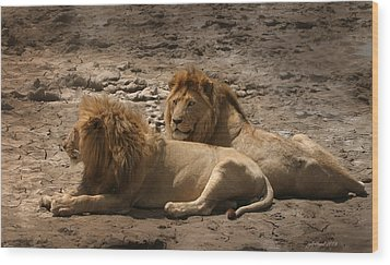 Lion Brothers Wood Print by Joseph G Holland