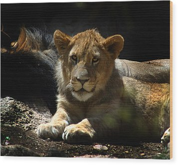 Lion Cub Wood Print by Anthony Jones