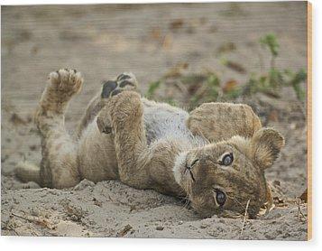 Lion Cub Wood Print by Johan Elzenga