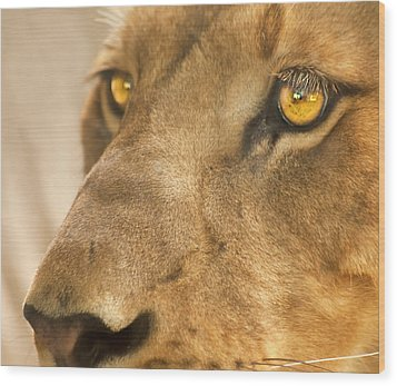 Lion Face Wood Print by Carolyn Marshall