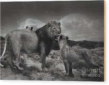 Wood Print featuring the photograph Lion Family by Christine Sponchia