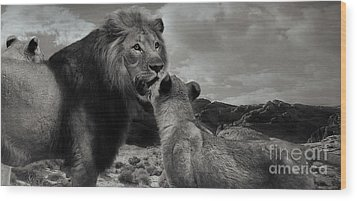 Wood Print featuring the photograph Lion Family Panorama by Christine Sponchia
