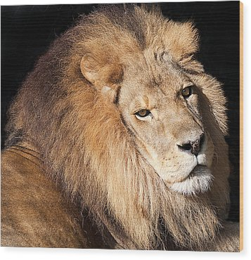 Lion Highlights Wood Print by Kenneth Albin