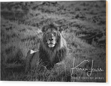 Wood Print featuring the photograph Lion King by Karen Lewis