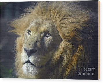 Wood Print featuring the photograph Lion Portrait by Savannah Gibbs