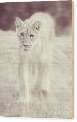 Lion Spirit Animal Wood Print