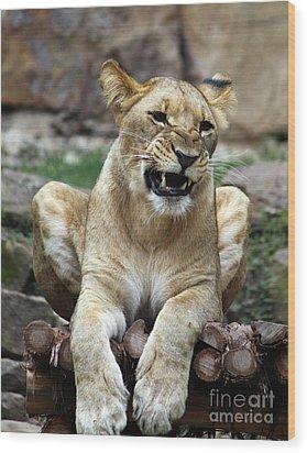Lioness 2 Wood Print