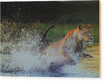 Lioness In Motion Wood Print