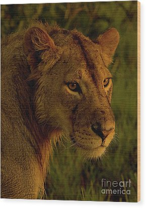 Lioness-signed-#6947 Wood Print