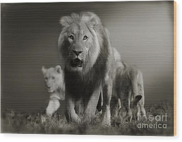 Wood Print featuring the photograph Lions On Their Way by Christine Sponchia