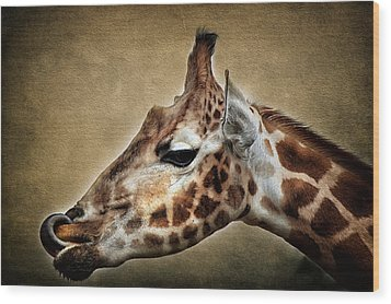 Lip Smacker Wood Print by Fiona Messenger