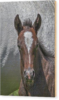 Wood Print featuring the photograph Lipizzan Horses #2 by Stuart Litoff