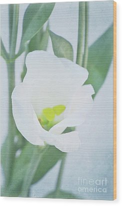 Lisianthus Wood Print by Angela Doelling AD DESIGN Photo and PhotoArt