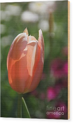 Lit Tulip 01 Wood Print by Andrea Jean