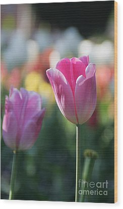 Lit Tulip 05 Wood Print by Andrea Jean
