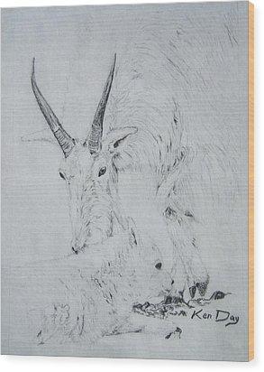 Little Billy Wood Print by Ken Day