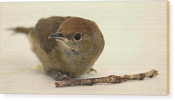 Little Bird 2 Wood Print