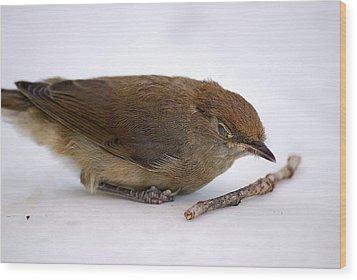 Little Bird  Wood Print