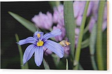 Wood Print featuring the photograph Little Blue Flower by Karen Musick