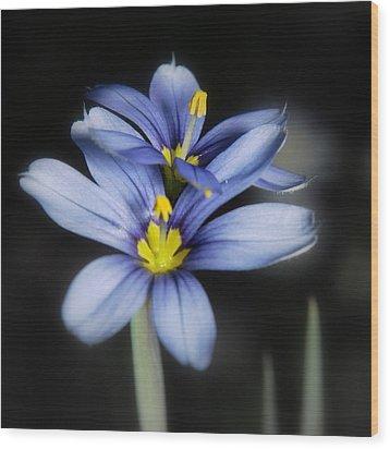 Wood Print featuring the photograph Little Blue Flowers by Karen Musick