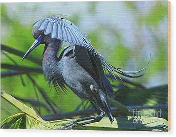 Wood Print featuring the photograph Little Blue Heron Alligator Farm by Deborah Benoit