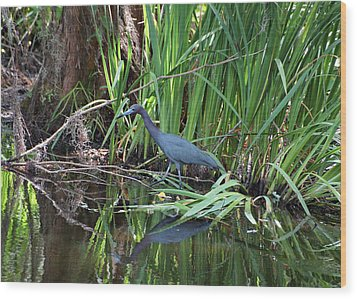 Wood Print featuring the photograph Little Blue Heron by Sandy Keeton