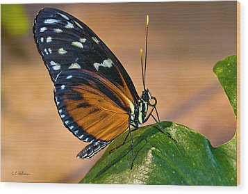 Little Butterfly Wood Print by Christopher Holmes