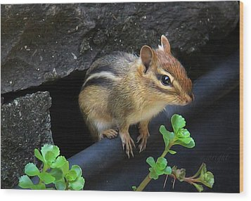 Little Chipmunk  Wood Print by Yvonne Wright
