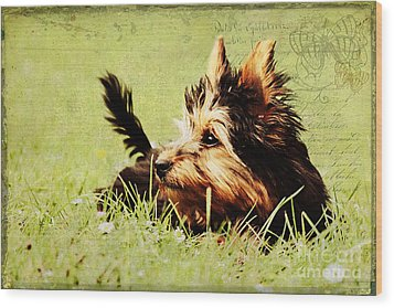 Little Dog Wood Print by Angela Doelling AD DESIGN Photo and PhotoArt