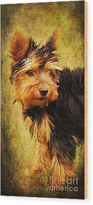 Little Dog II Wood Print by Angela Doelling AD DESIGN Photo and PhotoArt