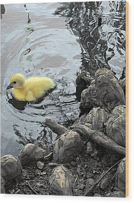 Little Ducky 2 Wood Print by Angelina Vick