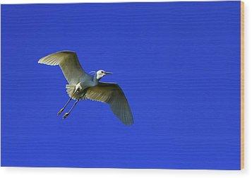Little Egret, Egretta Garzetta Wood Print by Elenarts - Elena Duvernay photo