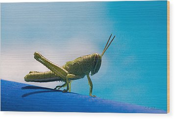 Little Grasshopper Wood Print by Christopher Holmes