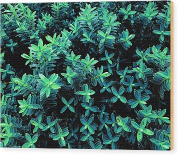 Little Green Crosses Wood Print
