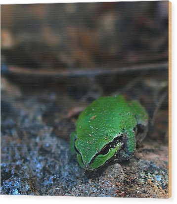 Little Green Frog Wood Print