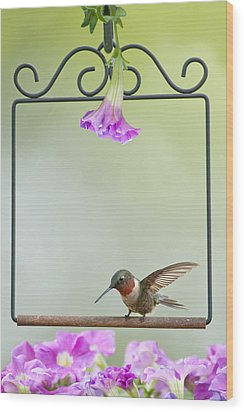 Little Hummer Inspecting The Garden Wood Print by Bonnie Barry