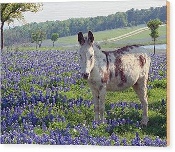 Little Jesus Donkey Wood Print by Linda Cox