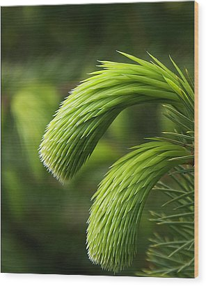 Little Lances Wood Print by Mark Denham