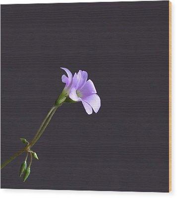 Little Lavender Flowers Wood Print