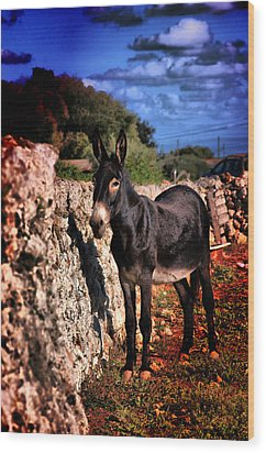 Little Mediterranean Donkey Dream Color With White Eyes And Belly  Hdr By Pedro Cardona Wood Print by Pedro Cardona Llambias