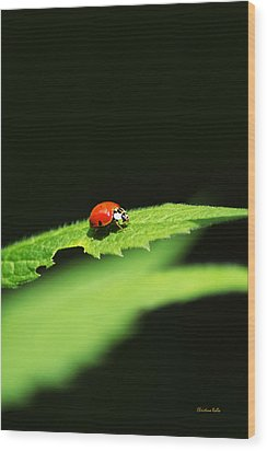 Little Red Ladybug On Green Leaf Wood Print by Christina Rollo
