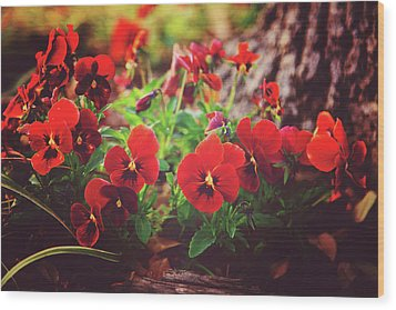 Little Red Pansies Wood Print by Toni Hopper