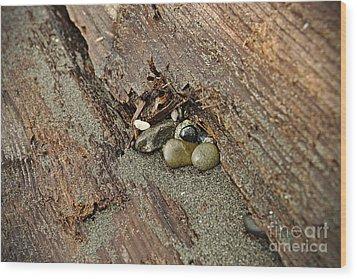 Little Rocks Wood Print by Cendrine Marrouat