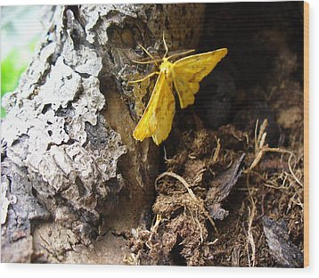 Little Yellow Moth Wood Print by Peggy King