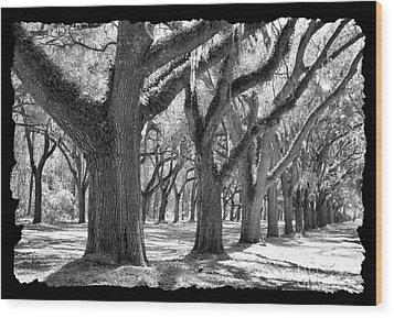 Live Oak Giants - Black And White Framing Wood Print by Carol Groenen
